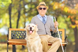 Senior blind gentleman sitting on a bench with his labrador retriever dog, in a park